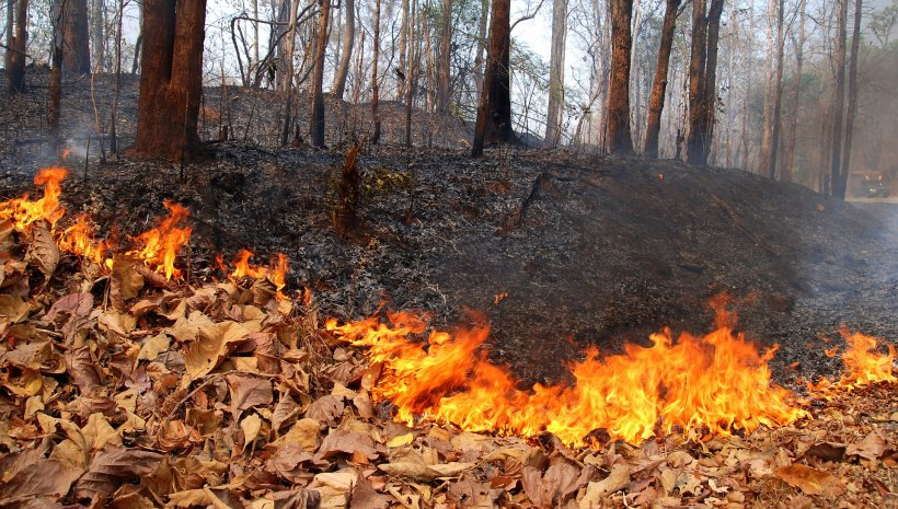 Forest_fire_mae_hong_son_province_01 (1)